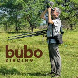 Bubo Birding
