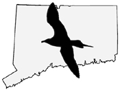 Connecticut Ornithological Association